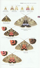 Concise Guide to the Moths of Great Britain and Ireland - internal plate